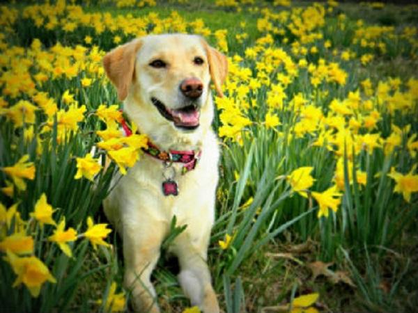 Ευτυχισμένος σκύλος 2