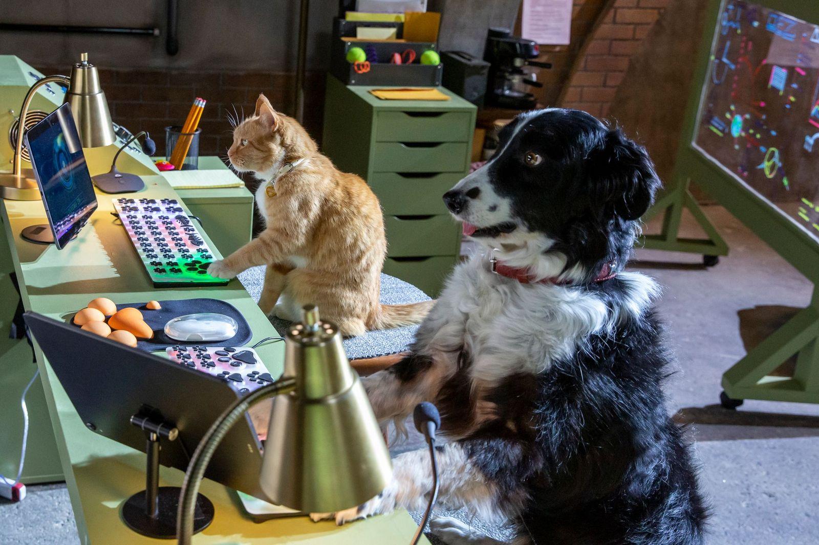 Σαν το σκύλο με τη γάτα 3